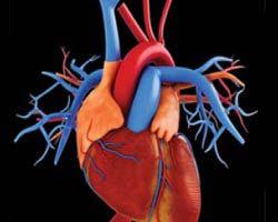 Vascular Thoracic